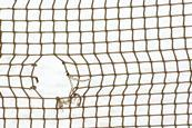 Hole in the net