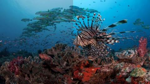 Bbc blue planet hlg to match dolby vision quality