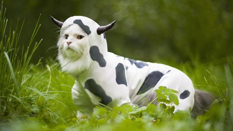 Cat dressed as cow 16x9